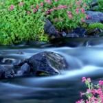 El río y la roca