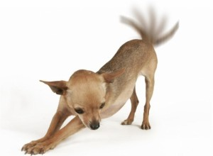 perro mueve la cola