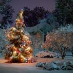 El Árbol de Navidad: la adaptación de un símbolo pagano
