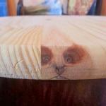 La reencarnación de mi gato