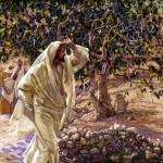 Jesús hace secarse la Higuera sin Frutos