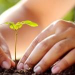 No juzgues cada día por las cosechas que consigues sino por las semillas que plantas