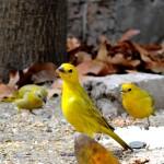 La señora que da de comer a los pájaros en el parque dice que lo hace porque ama a los pájaros, pero no menciona el placer que eso le proporciona