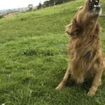 """""""Mi miedo era que me mordiera un perro mientras corría. Después de que me hubo mordido, descubrí que todos mis miedos eran peores que la mordedura del perro""""."""
