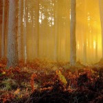 SELECCIÓN MUSICAL: El bosque mágico
