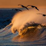 """La ola le preguntó al mar, """"¿Puedo ser como tú?  Es fácil – respondió el mar – sólo cálmate.  Ramana Maharishi"""