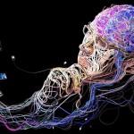 Curiosas informaciones sobre nuestra mente