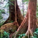Imagínate árbol que se expande en todas las direcciones
