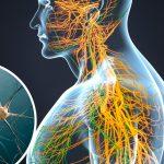 El sistema nervioso y su relación con el ego y la conciencia